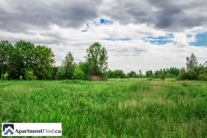Farmland for rent Ontario